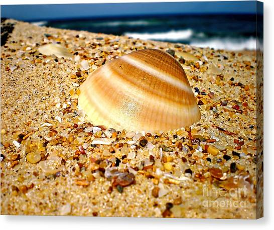 Sea Beyond The Shell Canvas Print