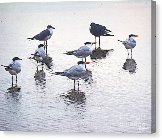 Sea Birds No.2 Canvas Print