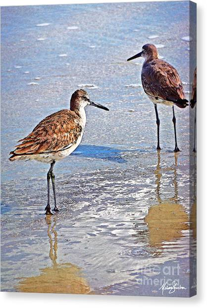 Sea Birds No.4 Canvas Print