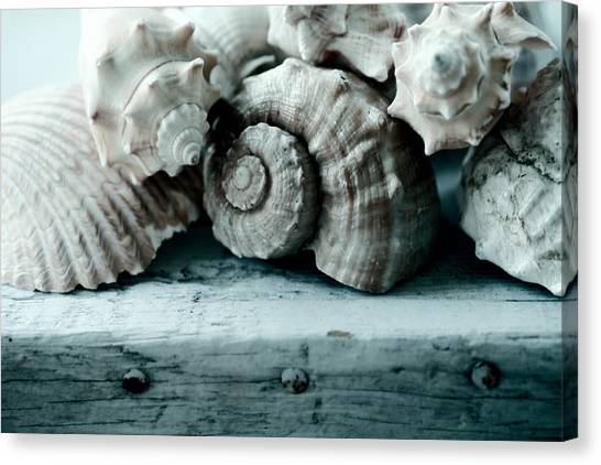 Conch Shells Canvas Print - Sea Gifts by Bonnie Bruno