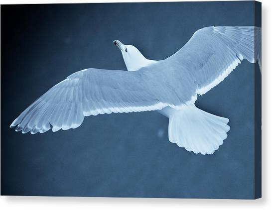 Sea Gull Over Icy Water Canvas Print