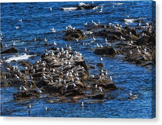 Canvas Print featuring the photograph Sea Gulls 6 by Perla Copernik