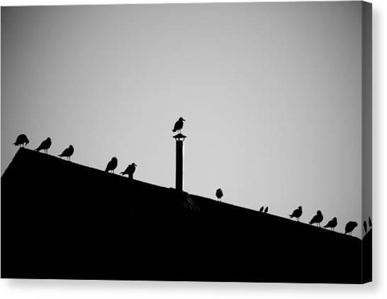 Sea Gulls In Silhouette Canvas Print