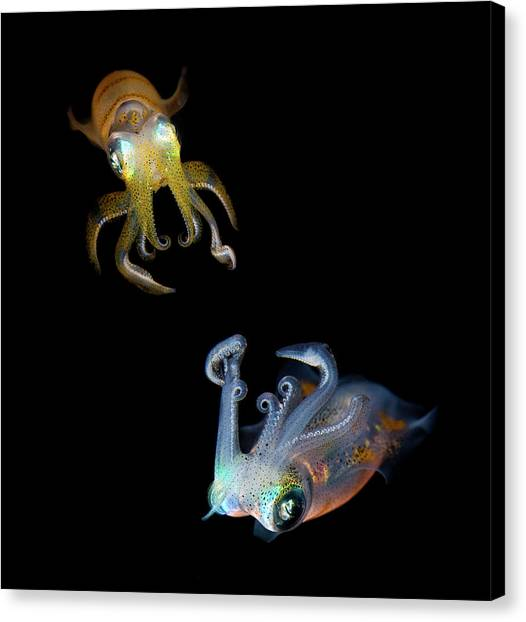 Squids Canvas Print - Sea Jewels by Andrey Narchuk