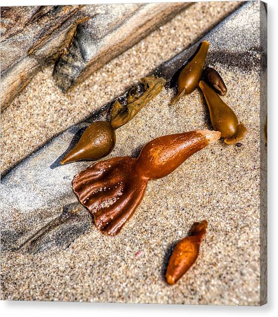 Sea Jewels Canvas Print by Peter Tellone