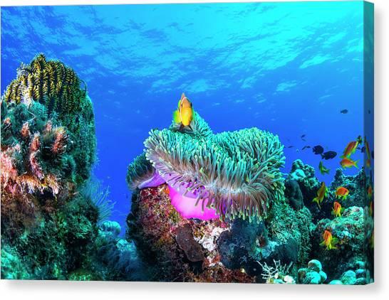 Coral Reefs Canvas Print - Sea Life by Roberto Marchegiani