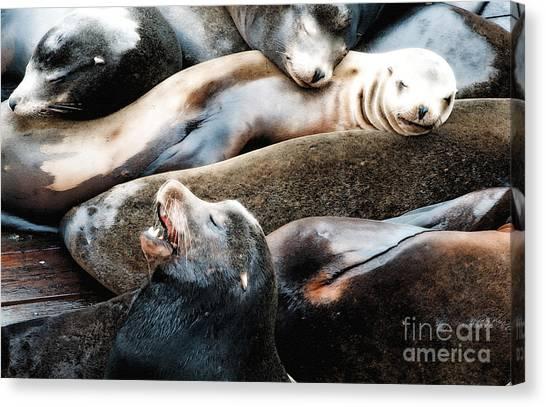 Oregon State University Osu Canvas Print - Sea Lion Dreams by Gwyn Newcombe