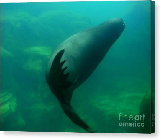 Sea Lion Canvas Print by Eclectic Captures