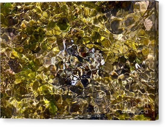 Ucsb Canvas Print - Sea Mosaic 1 Of Series 7 by Heidi Peschel