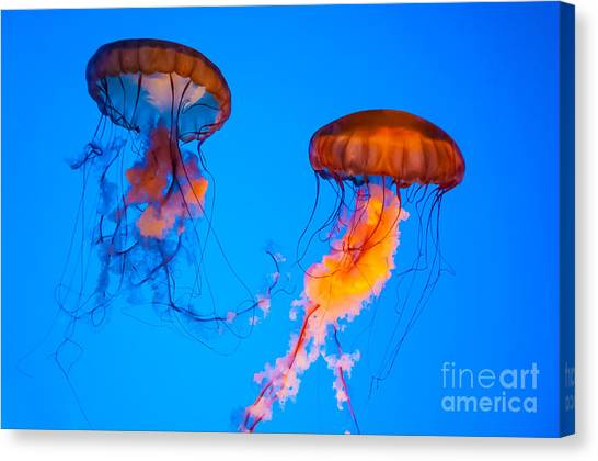 Sea Nettles Canvas Print