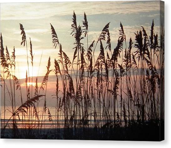 Fabulous Blue Sea Oats Sunrise Canvas Print