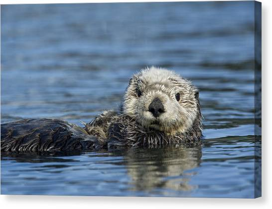 Canvas Print featuring the photograph Sea Otter Alaska by Michael Quinton