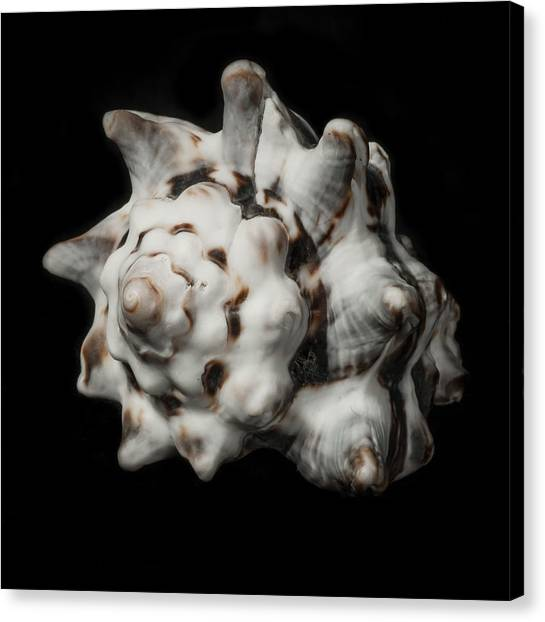Sea Shell #2 Canvas Print