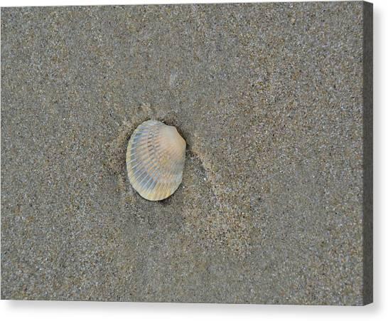 Sea Shell Sally Canvas Print by JAMART Photography