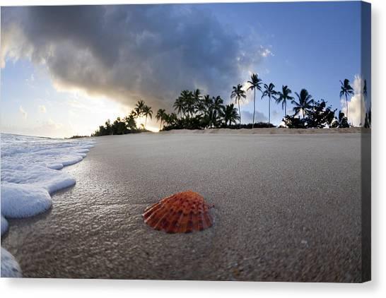 Ocean Sunrises Canvas Print - Sea Shell Sunrise by Sean Davey