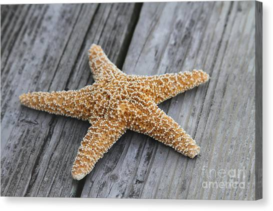 Sea Star On Deck Canvas Print