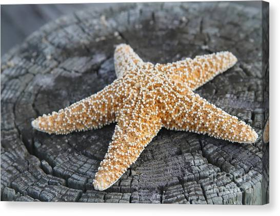 Sea Star On Post Canvas Print