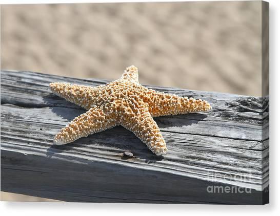 Sea Star On Railing Canvas Print