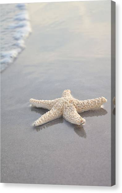 Calm Canvas Print - Sea Star by Samantha Leonetti