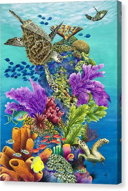 Tortoises Canvas Print - Sea Summit by Carolyn Steele
