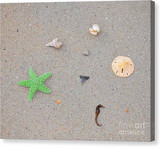 Shark Teeth Canvas Print - Sea Swag - Green by Al Powell Photography USA