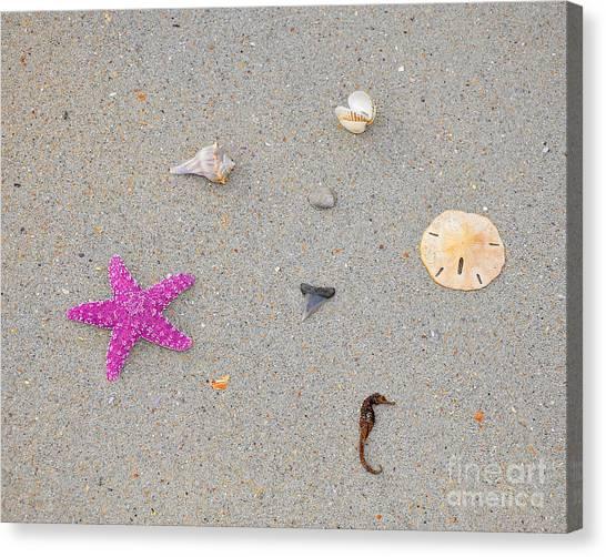 Shark Teeth Canvas Print - Sea Swag - Pink by Al Powell Photography USA