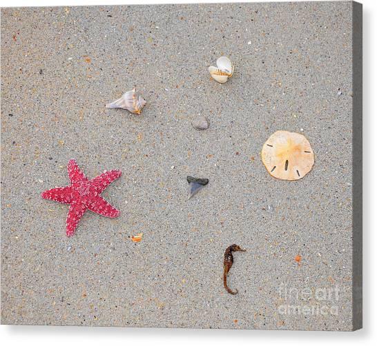 Shark Teeth Canvas Print - Sea Swag - Red by Al Powell Photography USA
