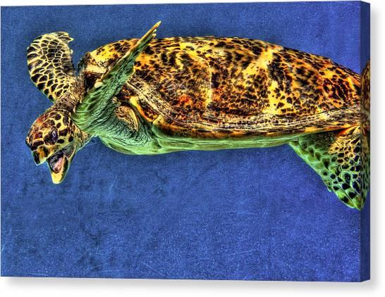 Sea Turtel Canvas Print by Karen Walzer
