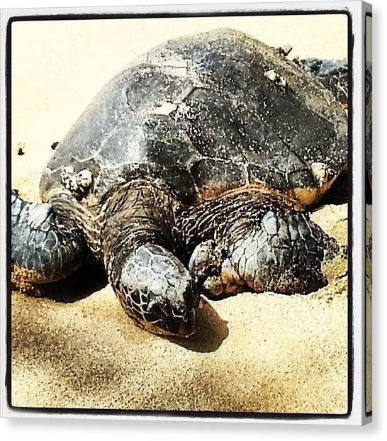 Sea Turtles Canvas Print - Sea Turtle Basking On Shore by JP Latkovic