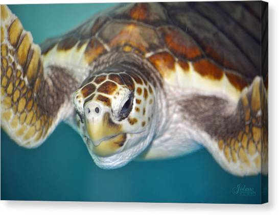 Sea Turtle Canvas Print
