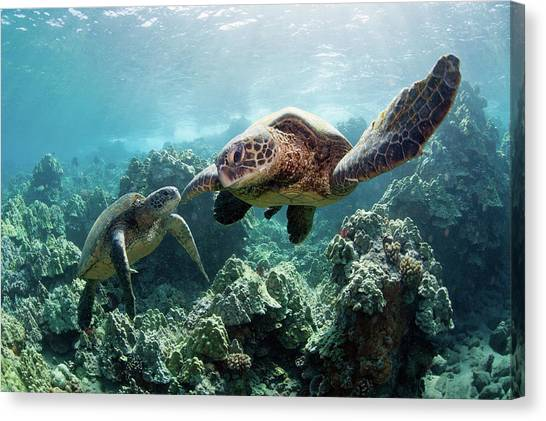Sea Turtles Canvas Print by M Swiet Productions