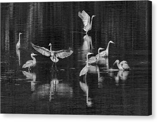Seabeck Herons Canvas Print