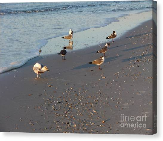 Seabirds Canvas Print