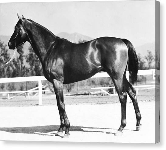 Quarter Horse Canvas Print - Seabiscuit Horse Racing #2 by Retro Images Archive