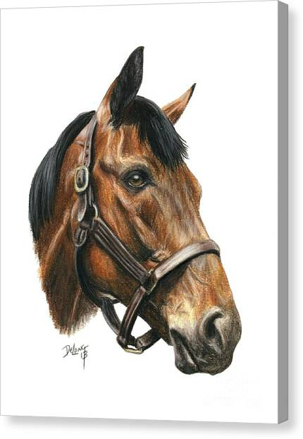 Seabiscuit Canvas Print