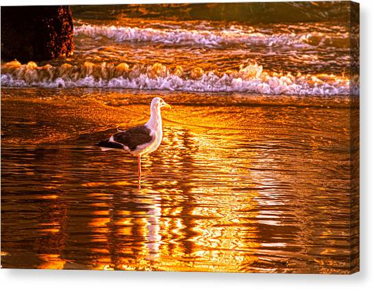 Seagul Reflects On A Golden Molten Shore Canvas Print