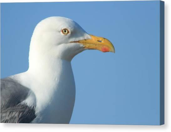 Seagull  Canvas Print by Diane Rada