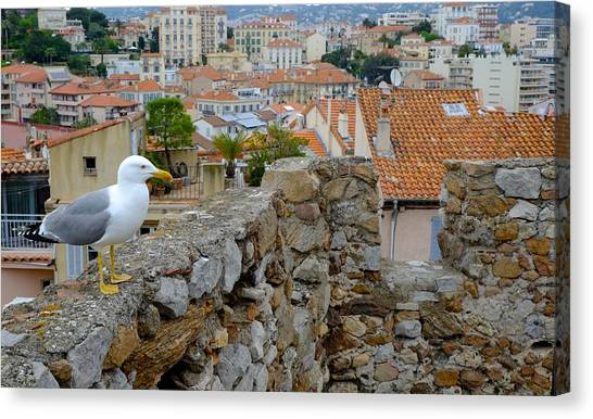 Seagull In Cannes Old City Canvas Print