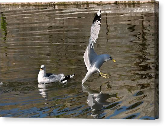 Canvas Print featuring the photograph Seagull by Leif Sohlman