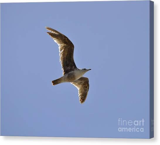 Seagull N Light  Canvas Print