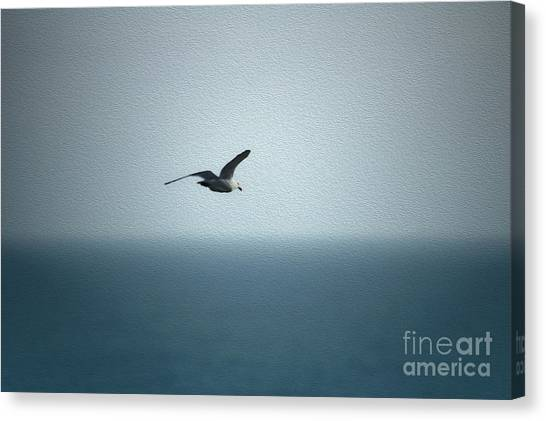 Seagull Canvas Print by Nur Roy