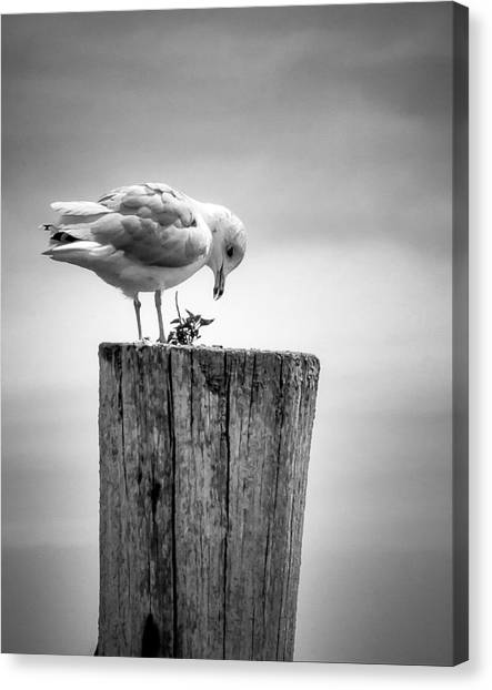 Seagull On Pier  Canvas Print