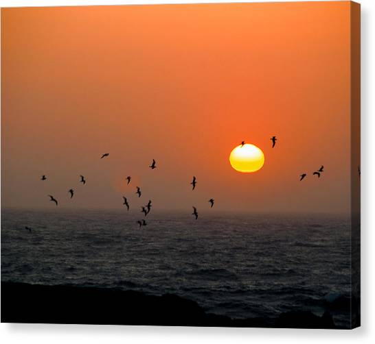 Canvas Print featuring the photograph Seagull On Sunset by William Havle