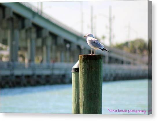 Seagull On The Dock Canvas Print