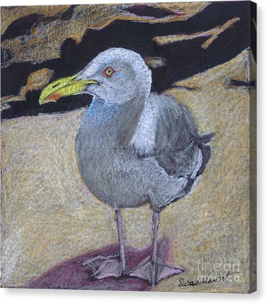 Seagull On The Rocks Canvas Print by Susan Herbst