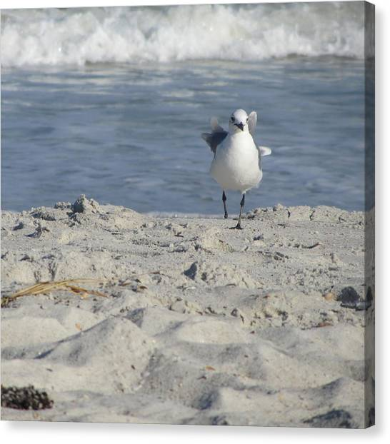 Seagulls At Fernandina 4 Canvas Print
