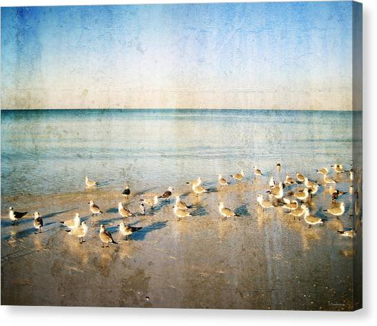 Seagulls Gathering By Sharon Cummigs Canvas Print by William Patrick