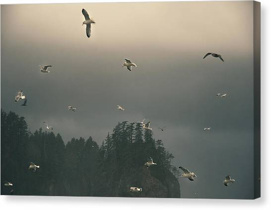 Seagulls In A Storm Canvas Print