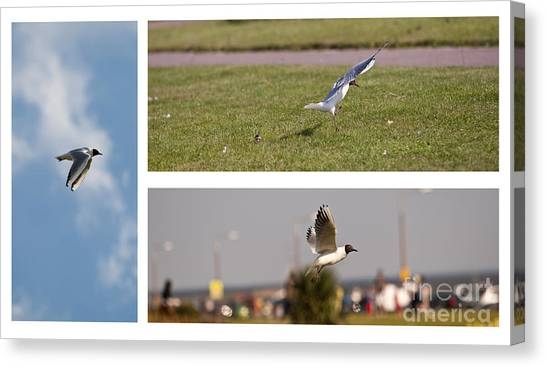 Seagulls Canvas Print by Lesley Rigg