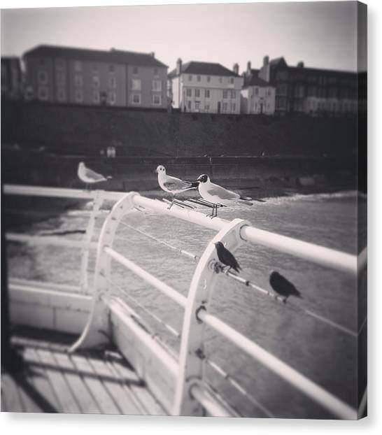Starlings Canvas Print - Seagulls Of The East Coast Cromer Norfolk England by Crystal Money